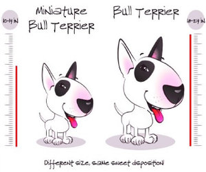 Mini bull terrier puppies for sale california